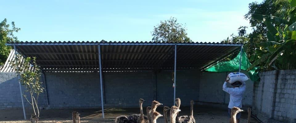 Mạnh dạn khởi nghiệp từ mô hình nuôi đà điểu tại xã Tân Lâm Hương