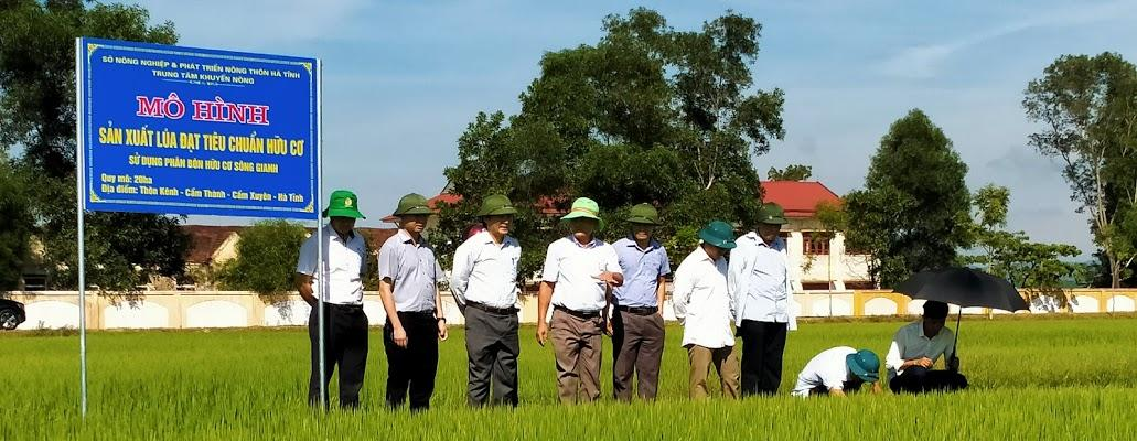 Giám đốc Sở Nông nghiệp và Phát triển nông thôn đi kiểm tra mô hình sản xuất lúa đạt tiêu chuẩn hữu cơ.