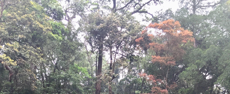 Hà Tĩnh: Chủ động bảo vệ rừng trong dịp tết Nguyên đán Canh Tý 2020