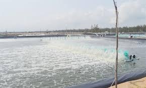 Thực hiện khung lịch thời vụ thả giống nuôi trồng thủy sản năm 2020