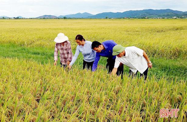 Hai HTX đầu tiên ở Hà Tĩnh được công nhận đạt chuẩn VietGap cho sản phẩm lúa gạo