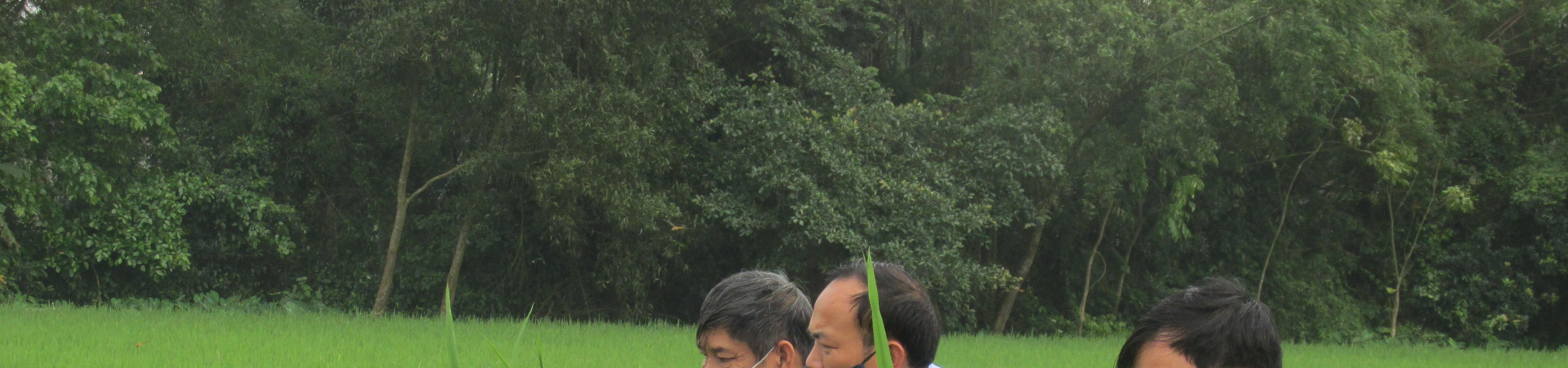 Đảm bảo sản xuất nông nghiệp ổn định trong mùa dịch covid - 19