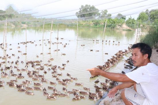 Thu nhập tiền tỷ từ chăn nuôi vịt trời