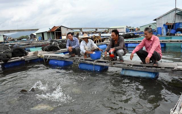 Tăng cường quản lý nuôi cá lồng bè trên sông, hồ chứa