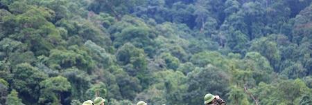 Tăng cường công tác bảo vệ rừng trước, trong và sau Tết
