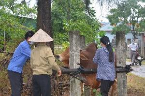 Hà Tĩnh tập trung cao hoàn thành tiêm phòng vắc xin trên đàn vật nuôi