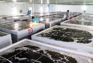 Thực trạng sản xuất giống thủy sản trên địa bàn tỉnh Hà Tĩnh và giải pháp phát triển trong thời gian tới