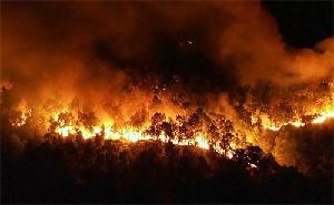 Tăng cường công tác phòng cháy chữa cháy rừng năm 2019.