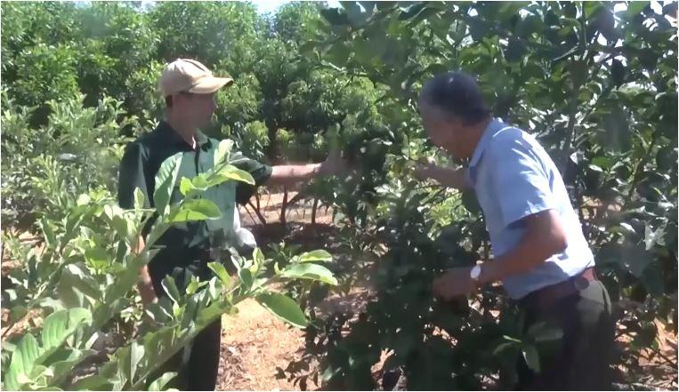 Cựu chiến binh xây dựng vườn mẫu trên vùng đất bán sơn địa...